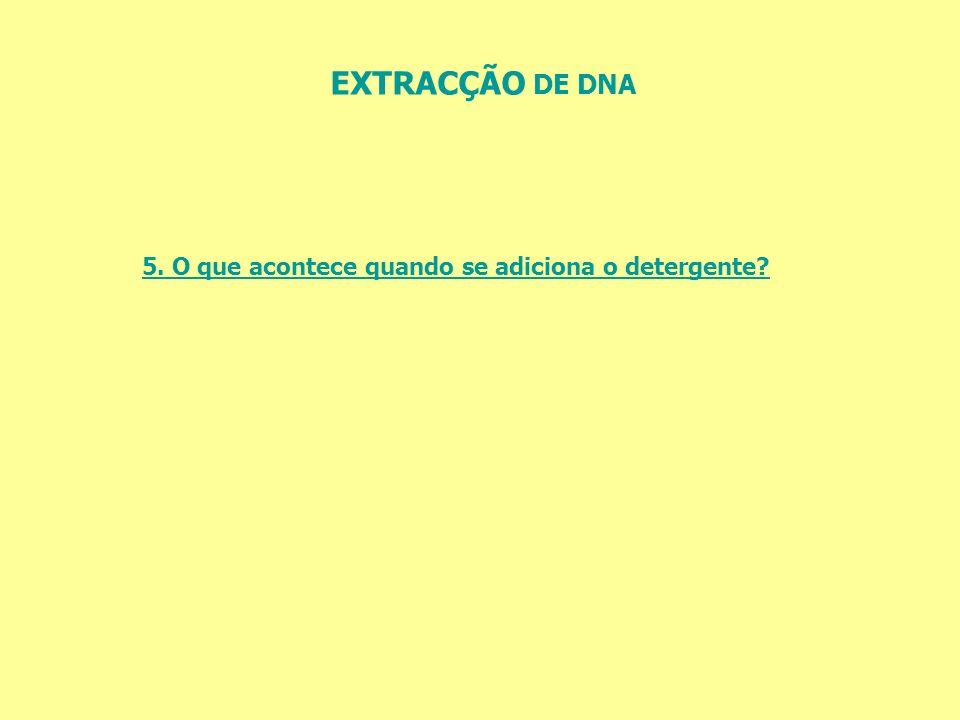 EXTRACÇÃO DE DNA 5. O que acontece quando se adiciona o detergente