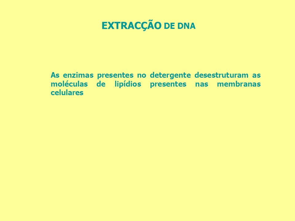 EXTRACÇÃO DE DNA As enzimas presentes no detergente desestruturam as moléculas de lipídios presentes nas membranas celulares.