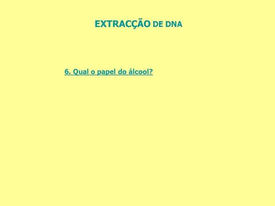 EXTRACÇÃO DE DNA 6. Qual o papel do álcool