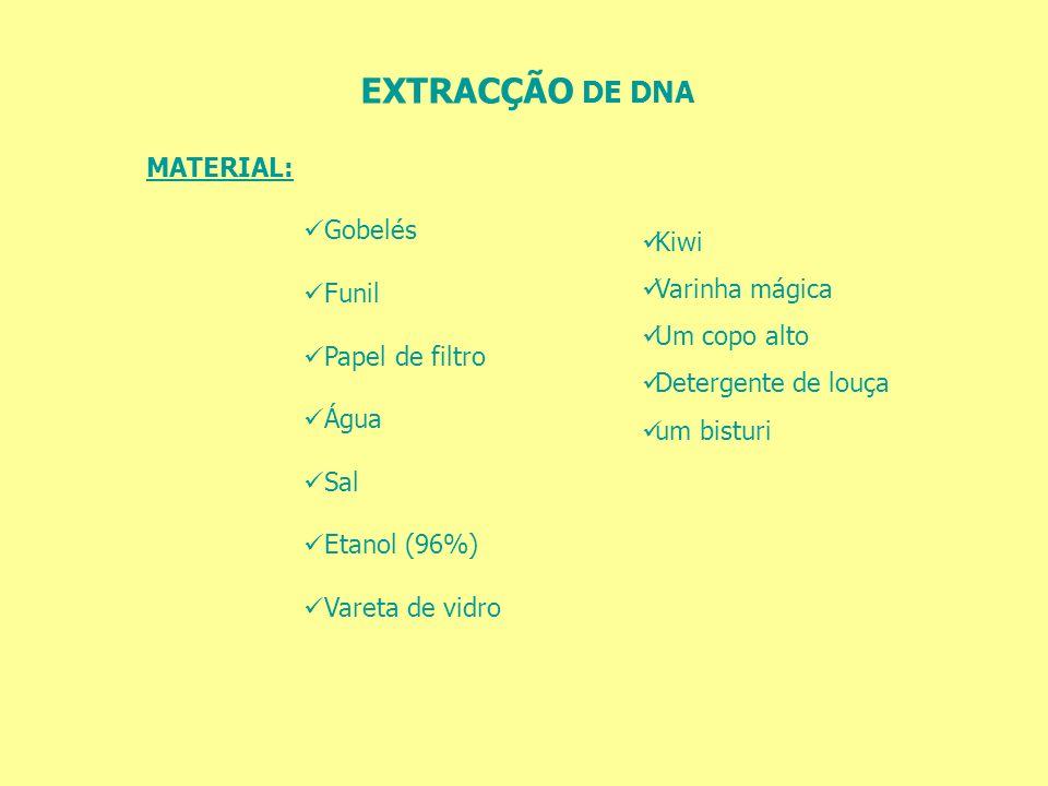 EXTRACÇÃO DE DNA MATERIAL: Gobelés Funil Kiwi Varinha mágica