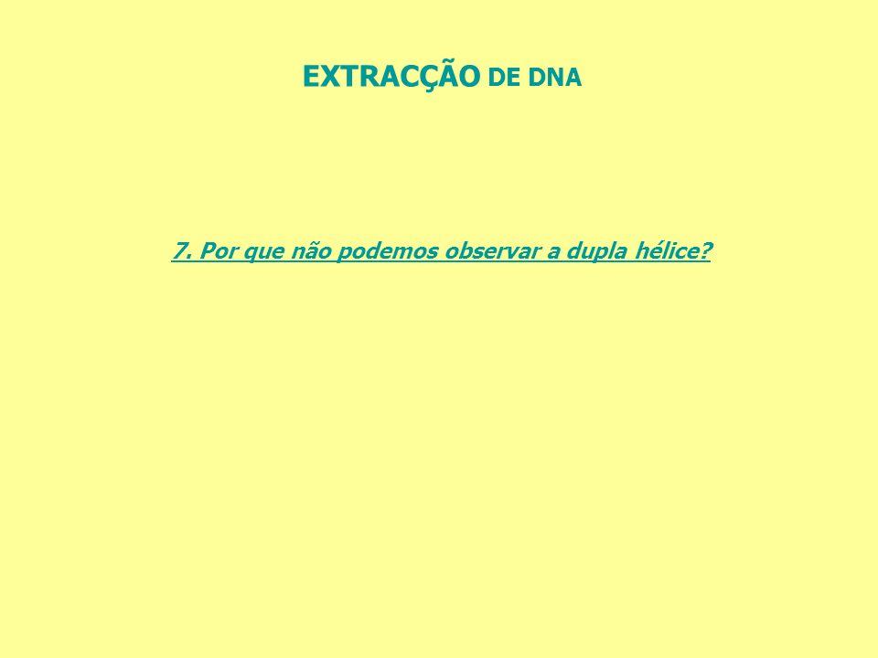 EXTRACÇÃO DE DNA 7. Por que não podemos observar a dupla hélice