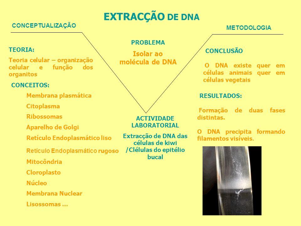 EXTRACÇÃO DE DNA CONCLUSÃO RESULTADOS: Isolar ao molécula de DNA