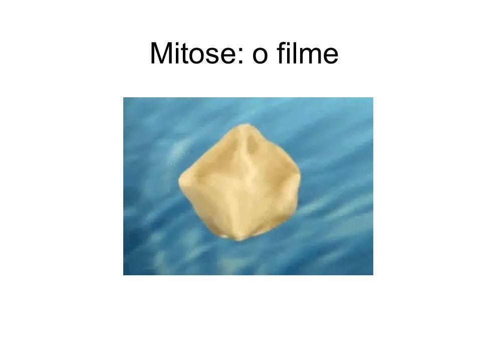 Mitose: o filme
