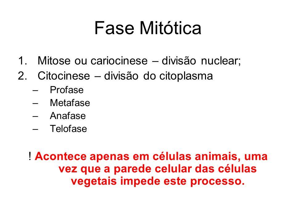 Fase Mitótica Mitose ou cariocinese – divisão nuclear;