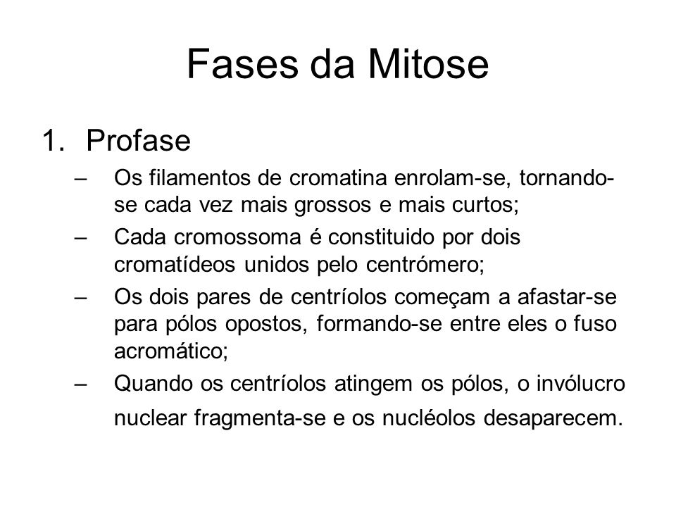Fases da Mitose Profase