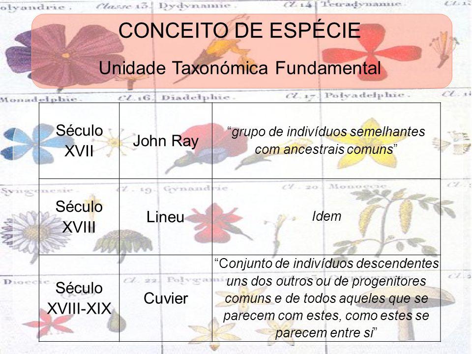 CONCEITO DE ESPÉCIE Unidade Taxonómica Fundamental Século XVII