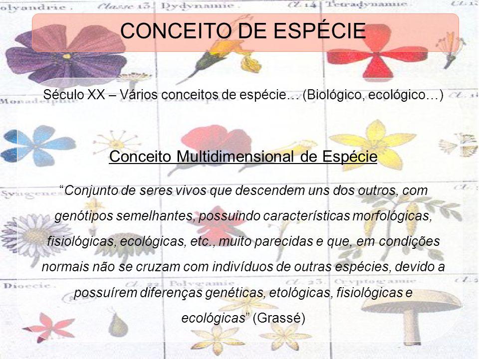 CONCEITO DE ESPÉCIE Conceito Multidimensional de Espécie