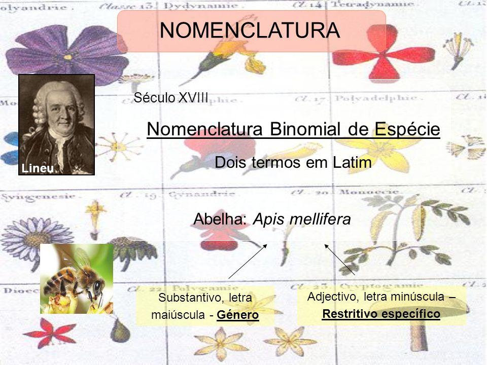 NOMENCLATURA Nomenclatura Binomial de Espécie Dois termos em Latim