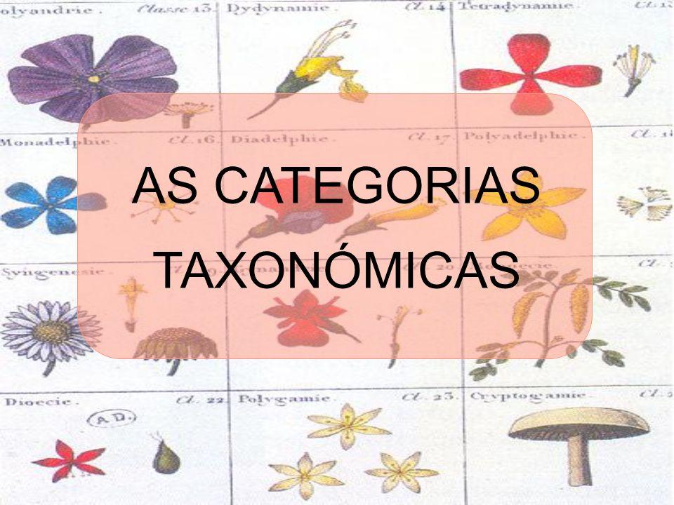 AS CATEGORIAS TAXONÓMICAS