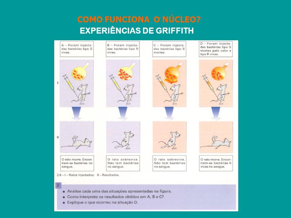 COMO FUNCIONA O NÚCLEO EXPERIÊNCIAS DE GRIFFITH