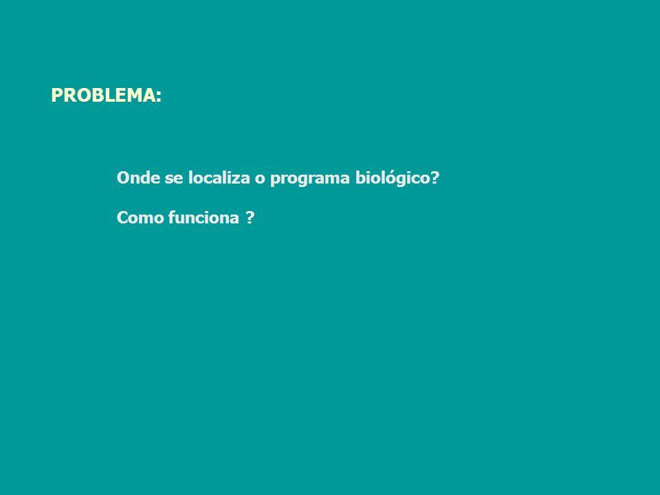 PROBLEMA: Onde se localiza o programa biológico Como funciona