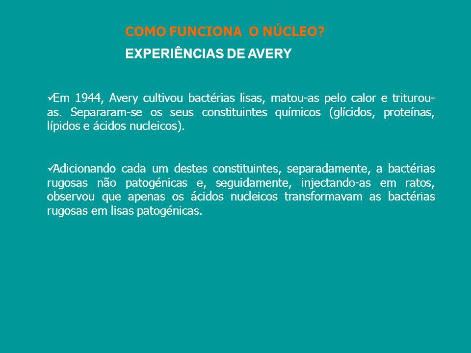 COMO FUNCIONA O NÚCLEO EXPERIÊNCIAS DE AVERY