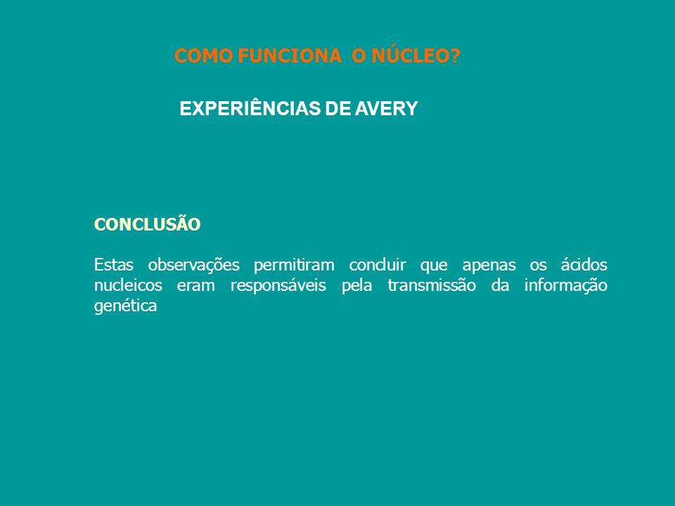 COMO FUNCIONA O NÚCLEO EXPERIÊNCIAS DE AVERY CONCLUSÃO