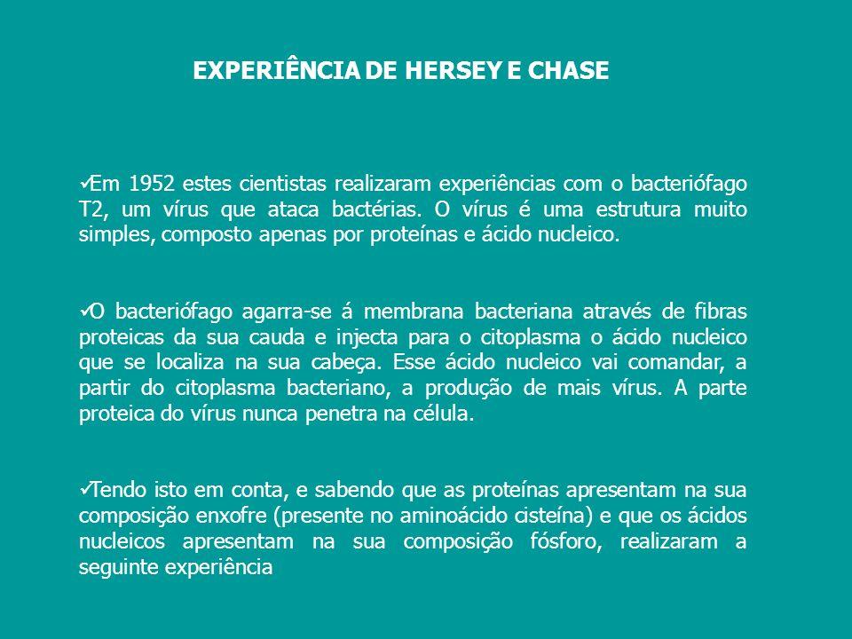 EXPERIÊNCIA DE HERSEY E CHASE