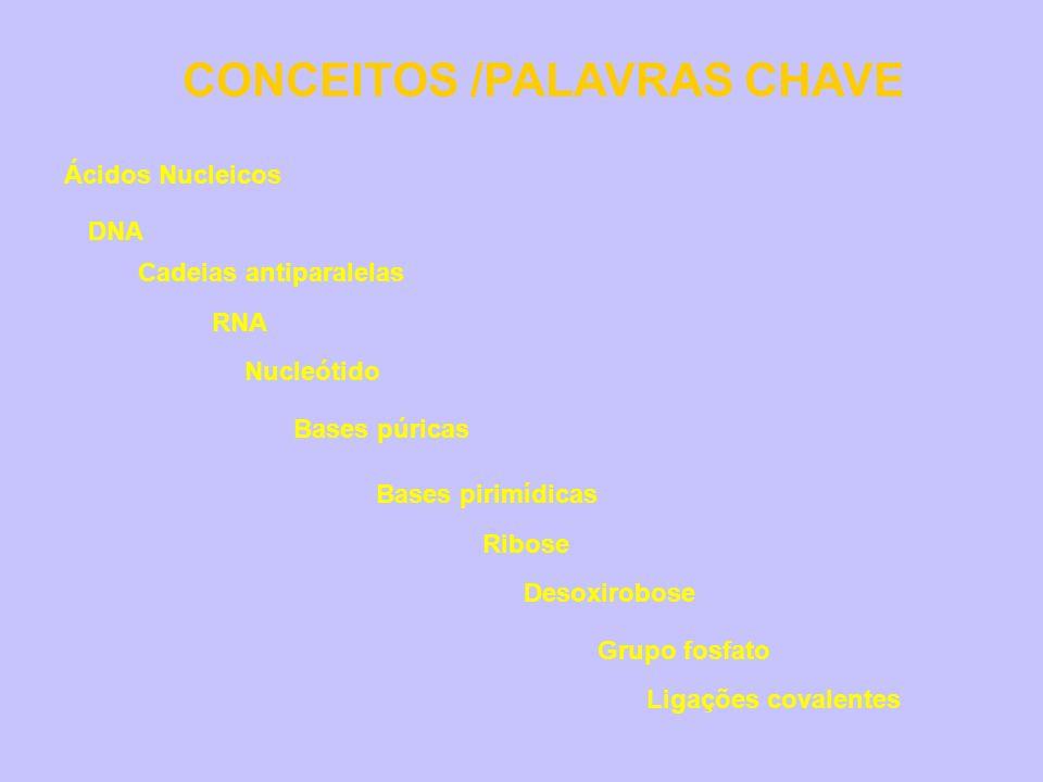 CONCEITOS /PALAVRAS CHAVE