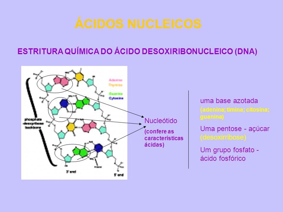 ÁCIDOS NUCLEICOS ESTRITURA QUÍMICA DO ÁCIDO DESOXIRIBONUCLEICO (DNA)