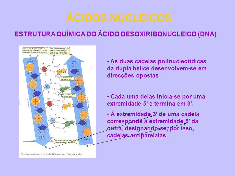 ÁCIDOS NUCLEICOS ESTRUTURA QUÍMICA DO ÁCIDO DESOXIRIBONUCLEICO (DNA)