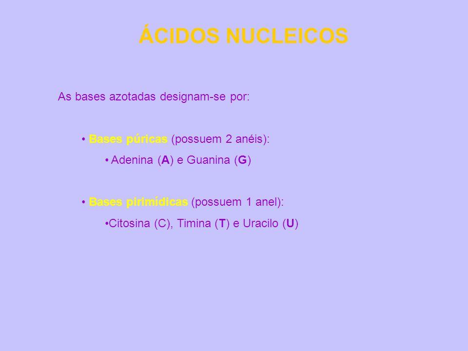 ÁCIDOS NUCLEICOS As bases azotadas designam-se por: