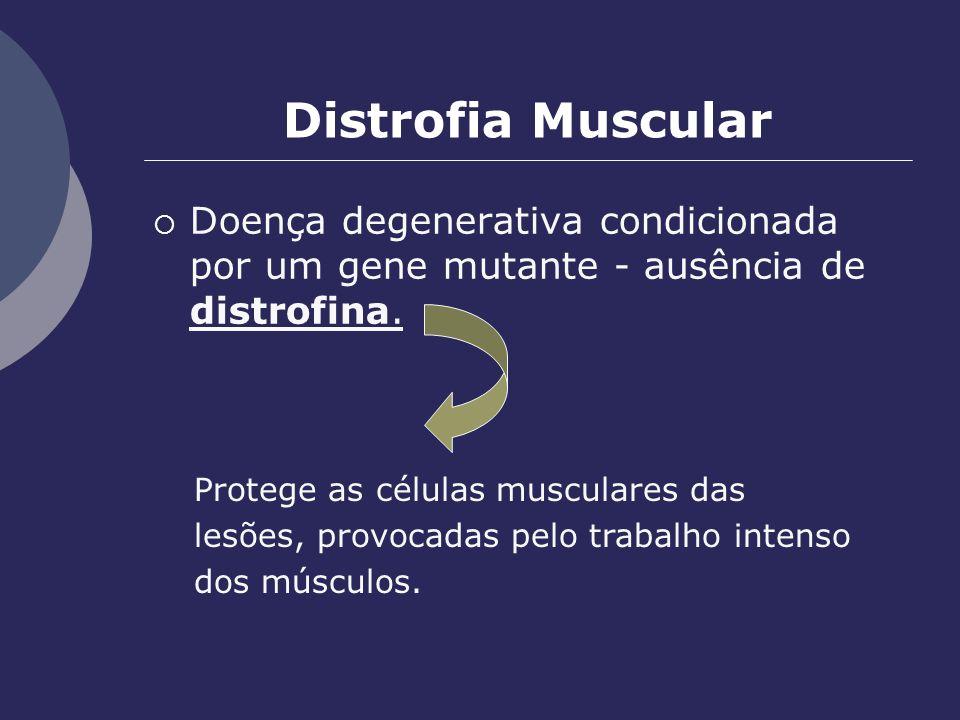 Distrofia Muscular Doença degenerativa condicionada por um gene mutante - ausência de distrofina. Protege as células musculares das.