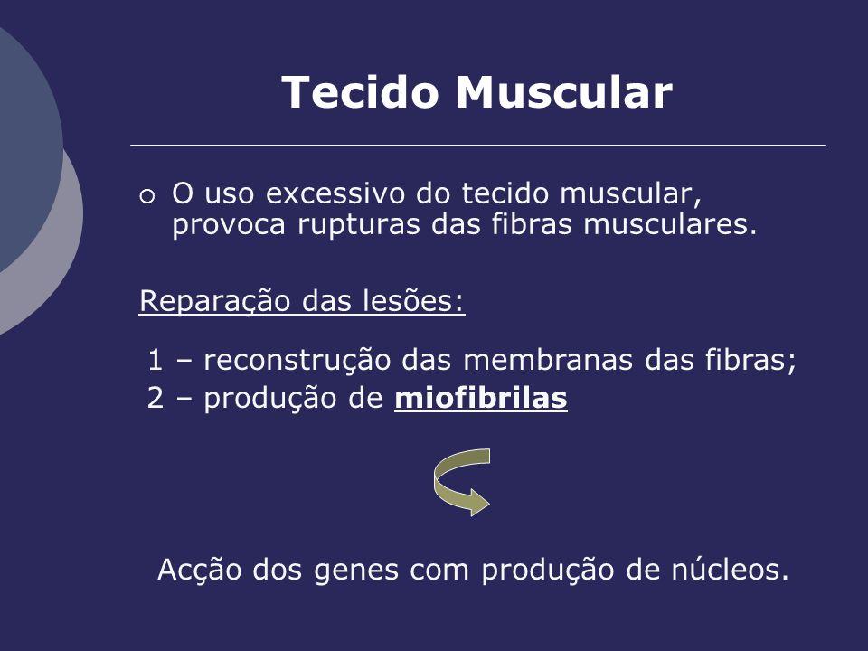Acção dos genes com produção de núcleos.