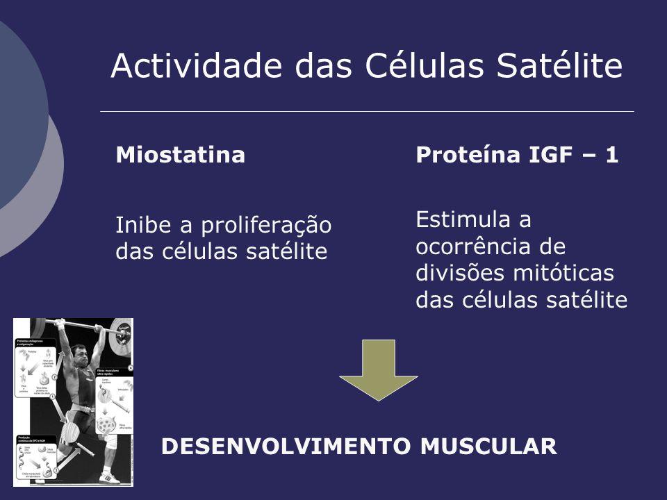 Actividade das Células Satélite