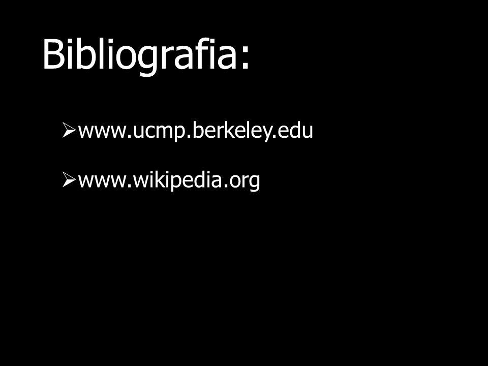 Bibliografia: www.ucmp.berkeley.edu www.wikipedia.org