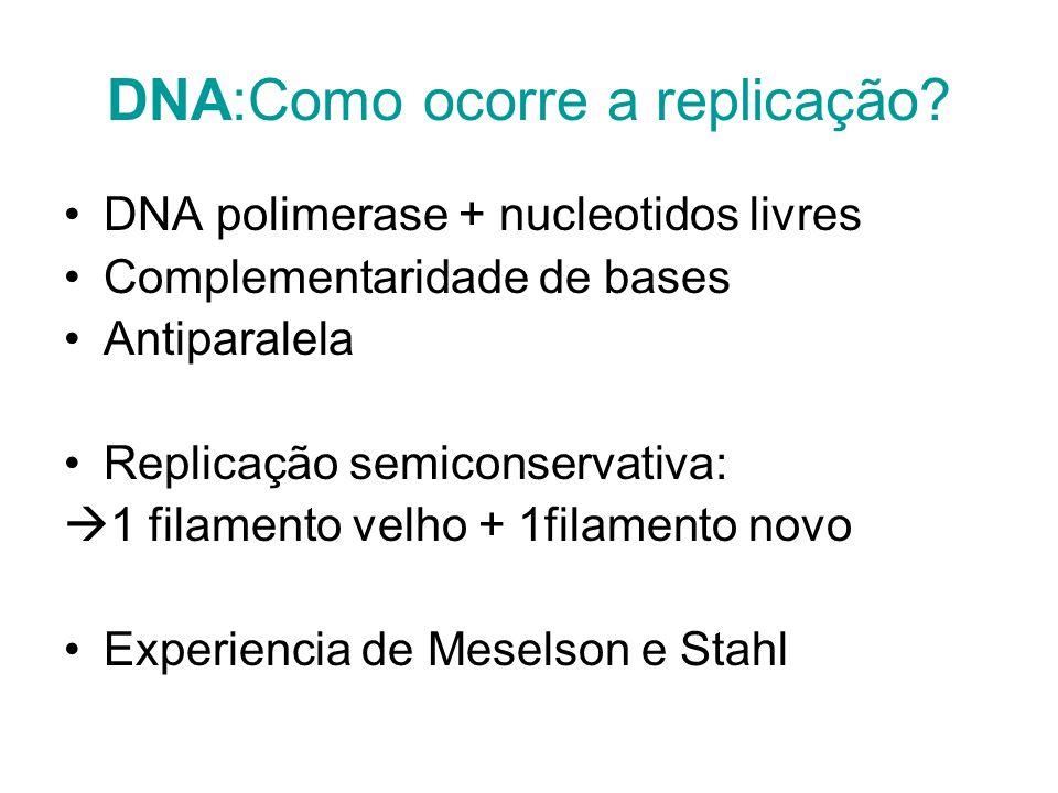 DNA:Como ocorre a replicação