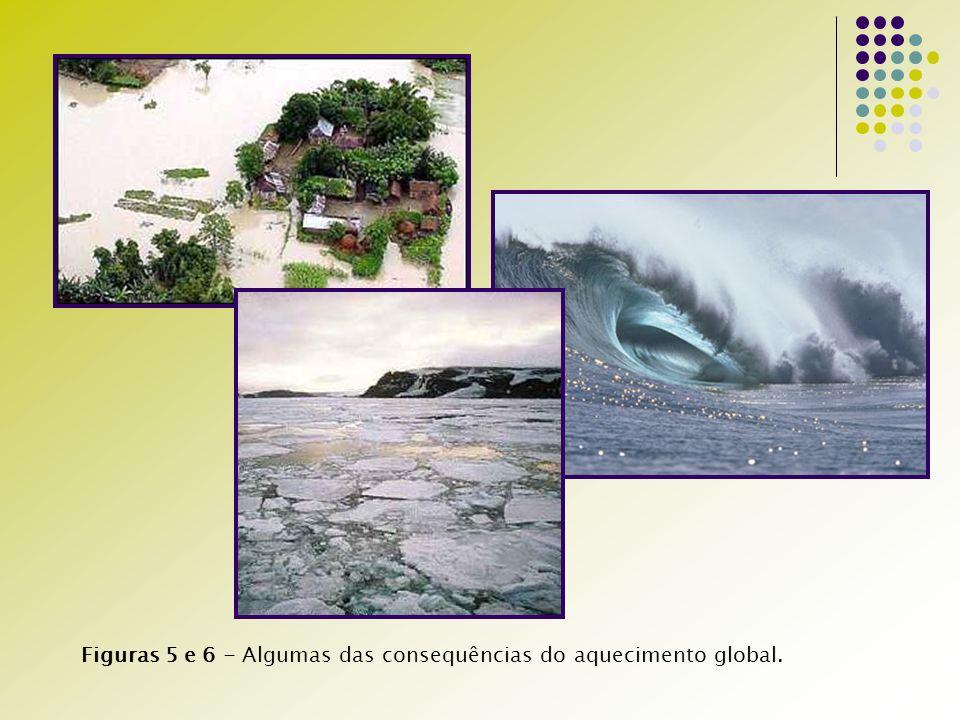Figuras 5 e 6 - Algumas das consequências do aquecimento global.