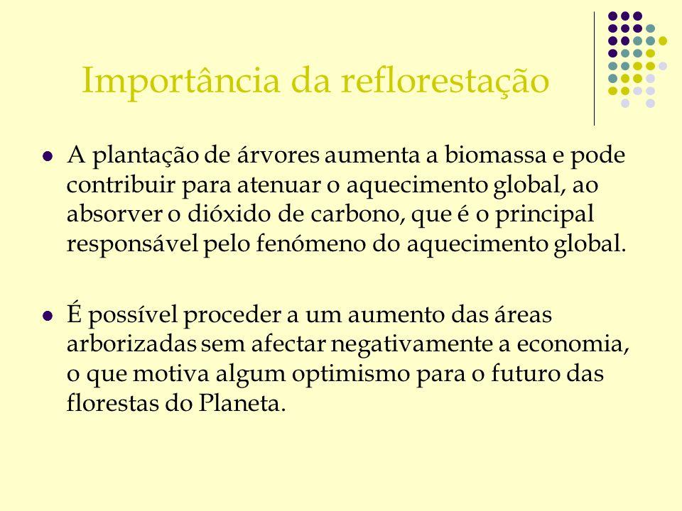 Importância da reflorestação