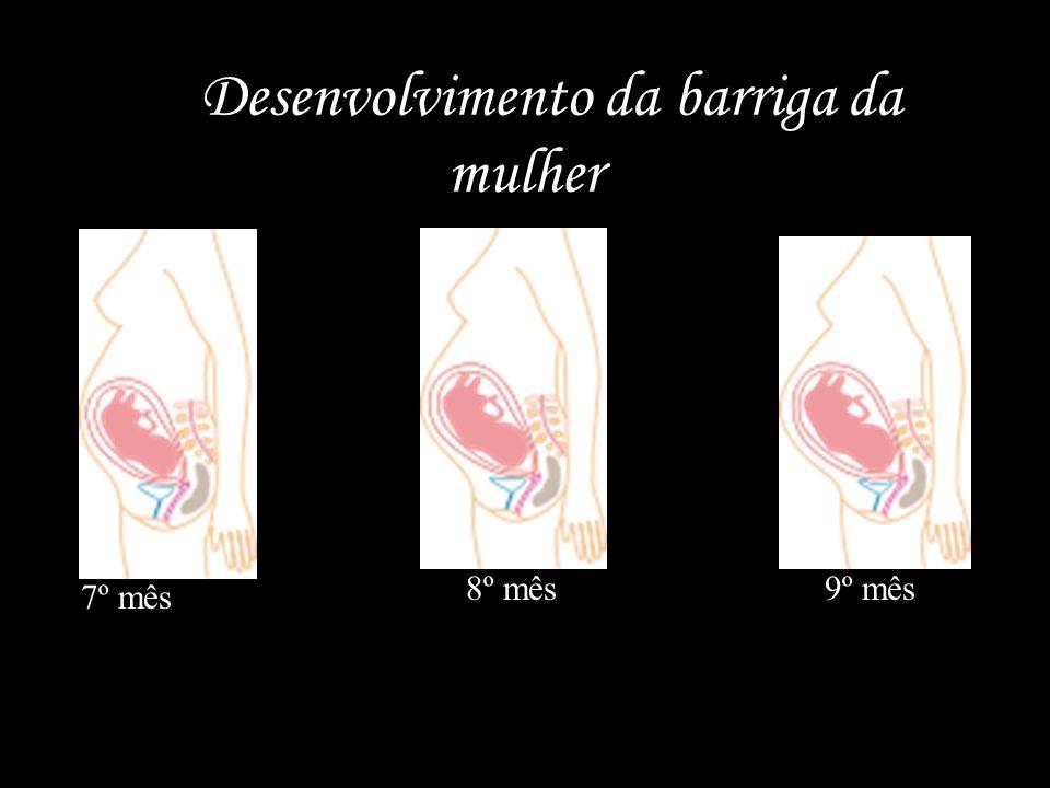 O Desenvolvimento da barriga da mulher