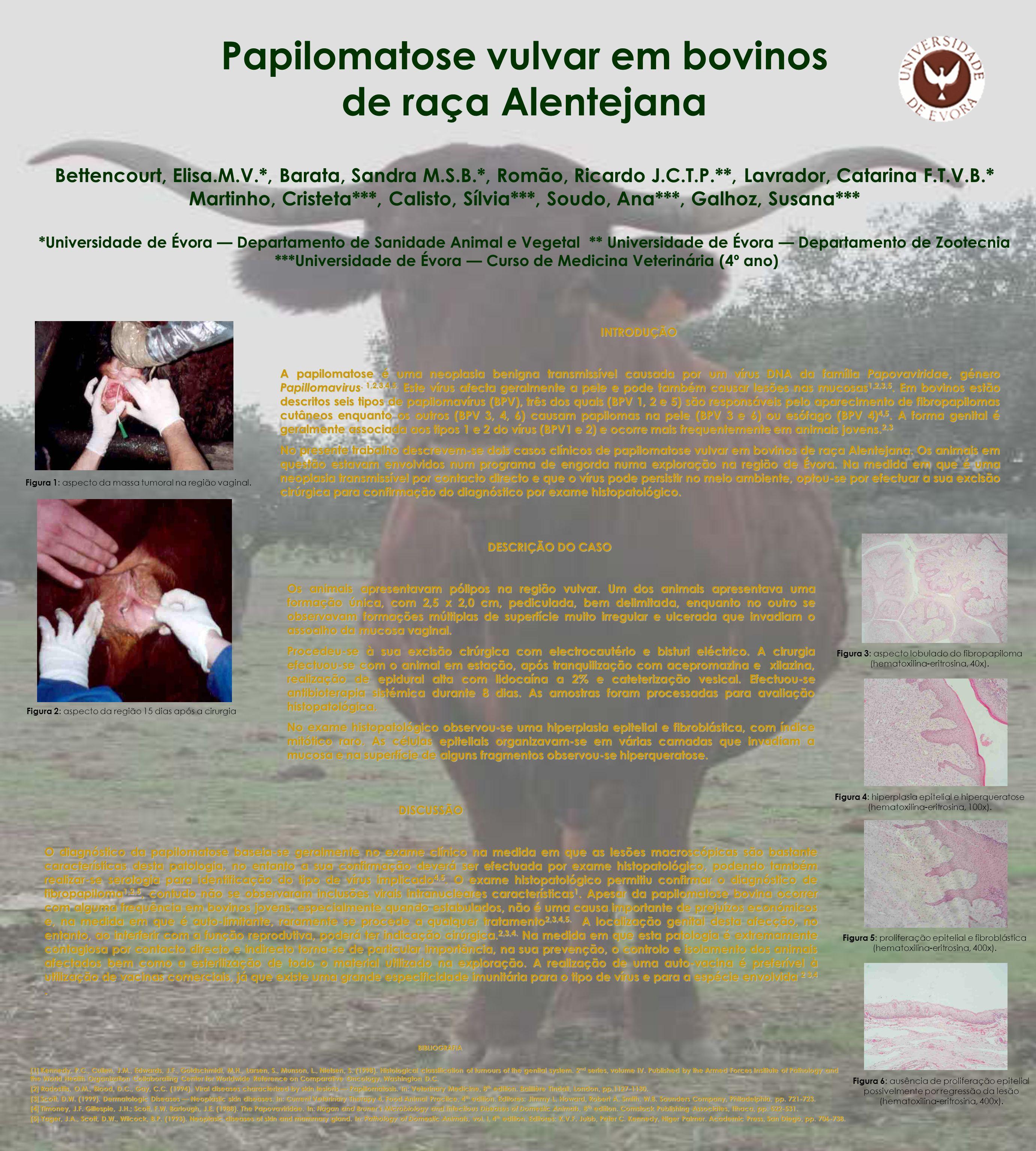 Papilomatose vulvar em bovinos de raça Alentejana