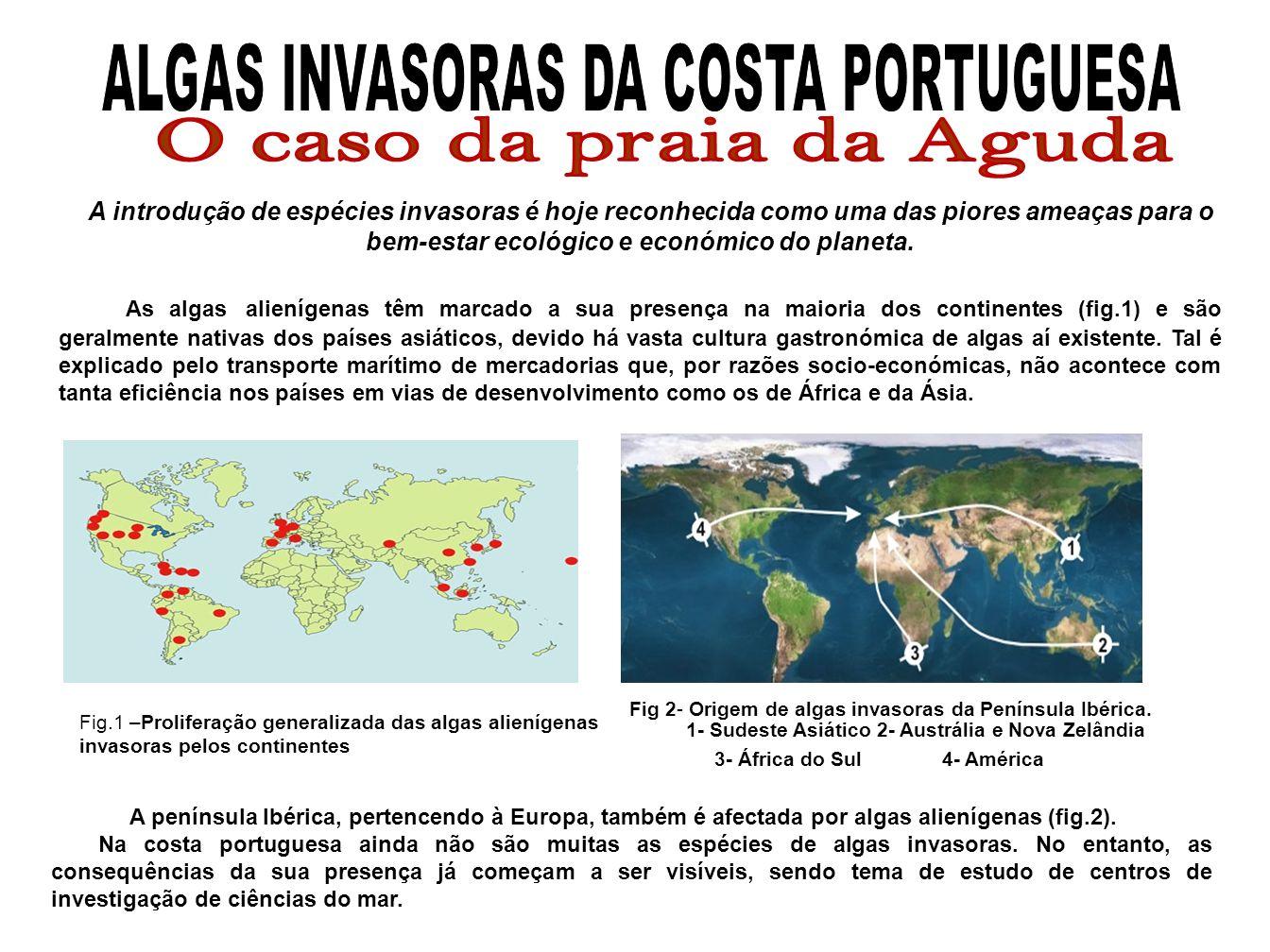 ALGAS INVASORAS DA COSTA PORTUGUESA