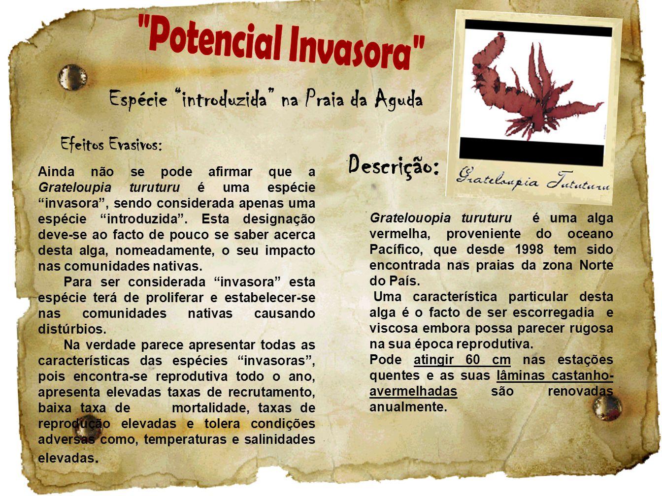 Potencial Invasora Descrição: