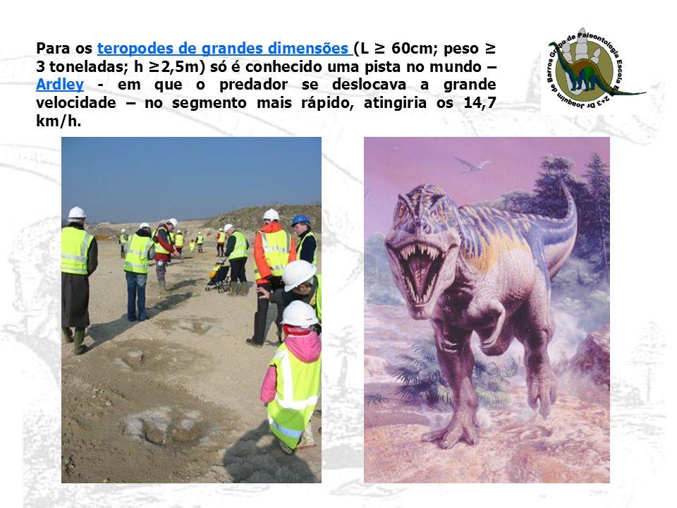 Para os teropodes de grandes dimensões (L ≥ 60cm; peso ≥ 3 toneladas; h ≥2,5m) só é conhecido uma pista no mundo – Ardley - em que o predador se deslocava a grande velocidade – no segmento mais rápido, atingiria os 14,7 km/h.