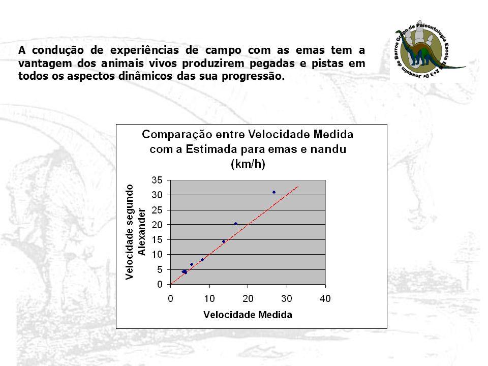 A condução de experiências de campo com as emas tem a vantagem dos animais vivos produzirem pegadas e pistas em todos os aspectos dinâmicos das sua progressão.