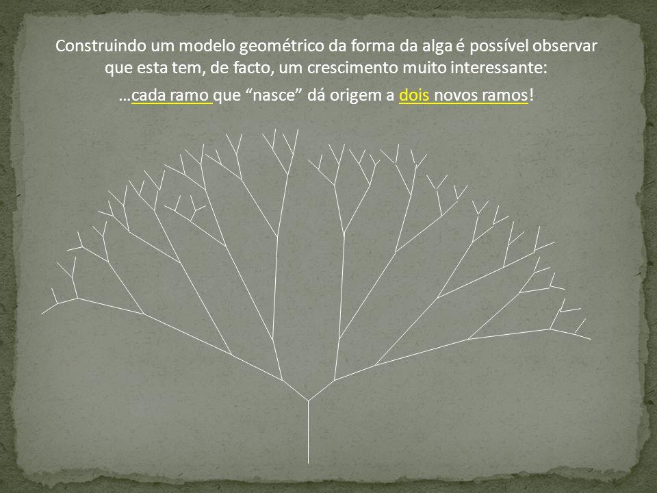 …cada ramo que nasce dá origem a dois novos ramos!