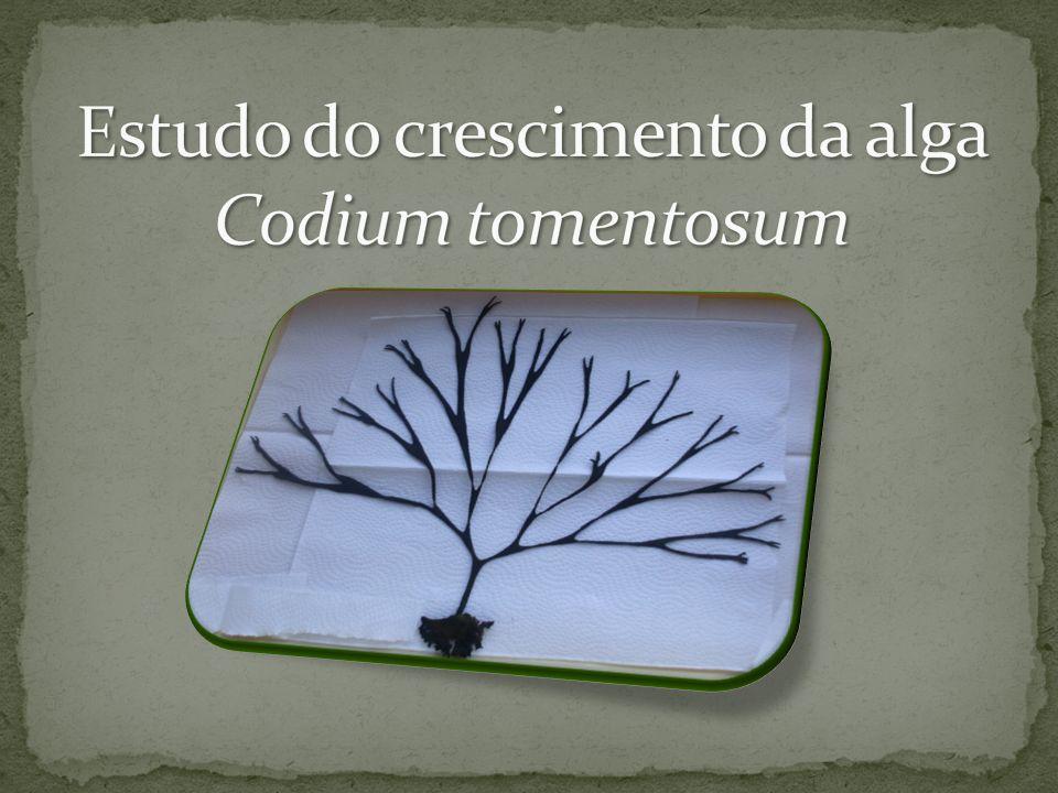Estudo do crescimento da alga Codium tomentosum