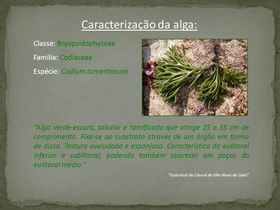 Caracterização da alga: