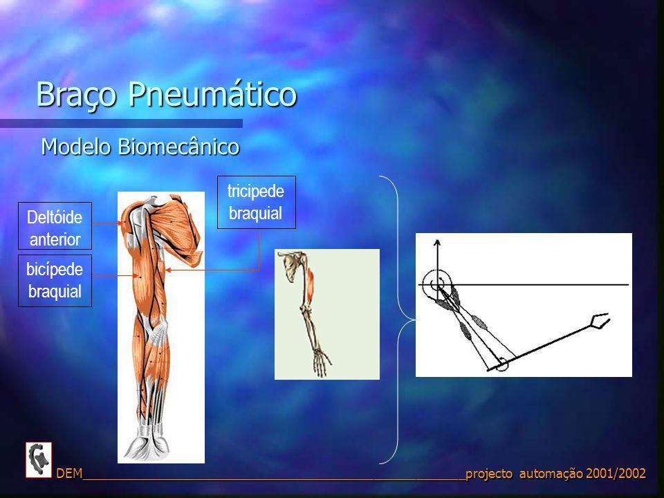 Braço Pneumático Modelo Biomecânico tricipede braquial