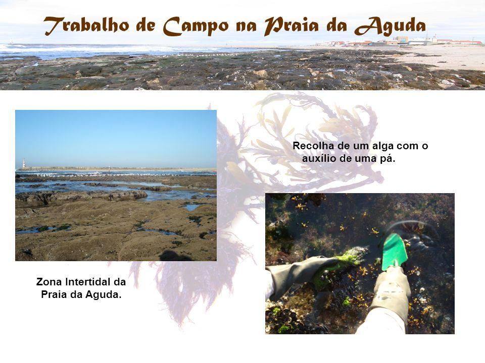 Trabalho de Campo na Praia da Aguda