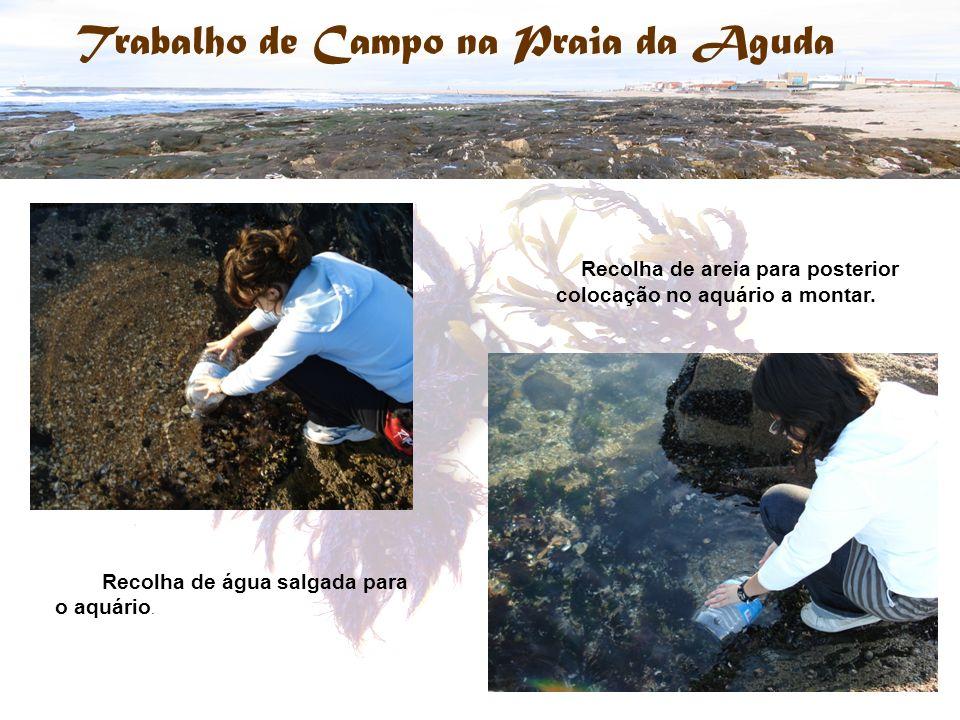 Recolha de areia para posterior colocação no aquário a montar.