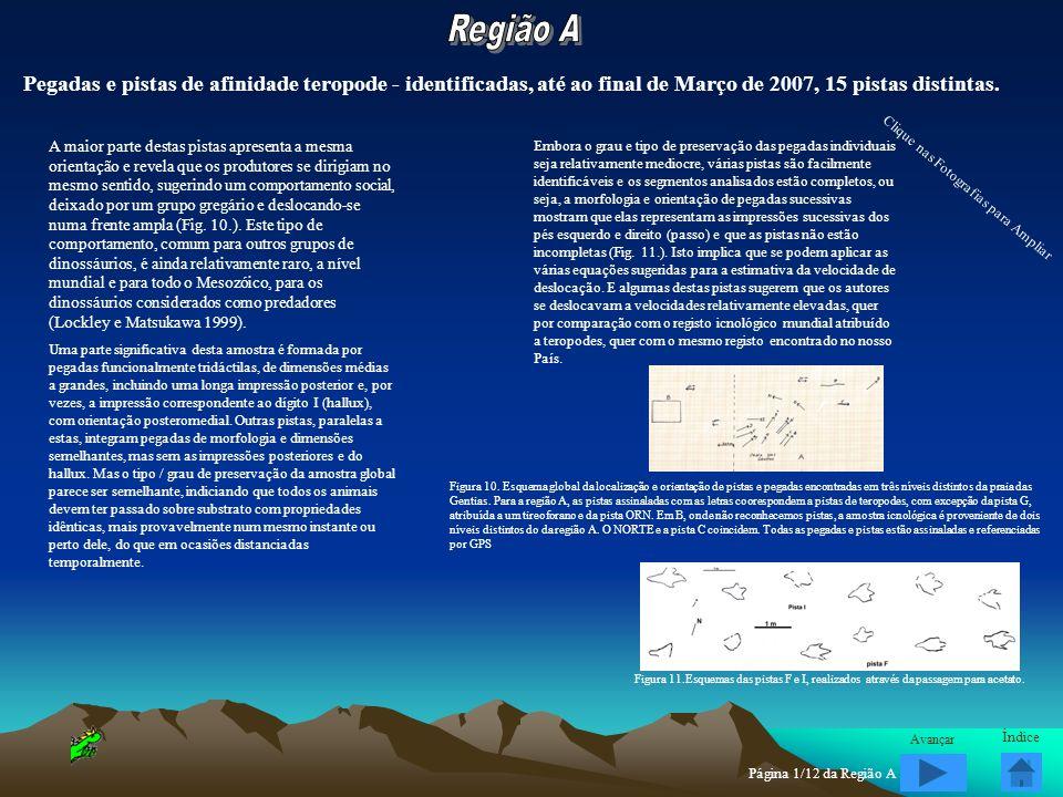 Região A Pegadas e pistas de afinidade teropode - identificadas, até ao final de Março de 2007, 15 pistas distintas.