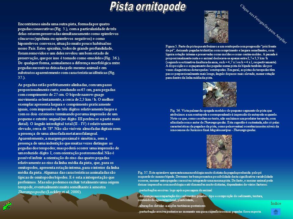 Pista ornitopode Clique nas Fotografias para Ampliar