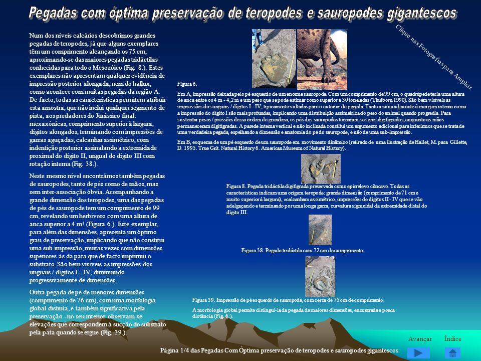 Pegadas com óptima preservação de teropodes e sauropodes gigantescos