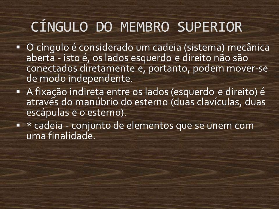 CÍNGULO DO MEMBRO SUPERIOR
