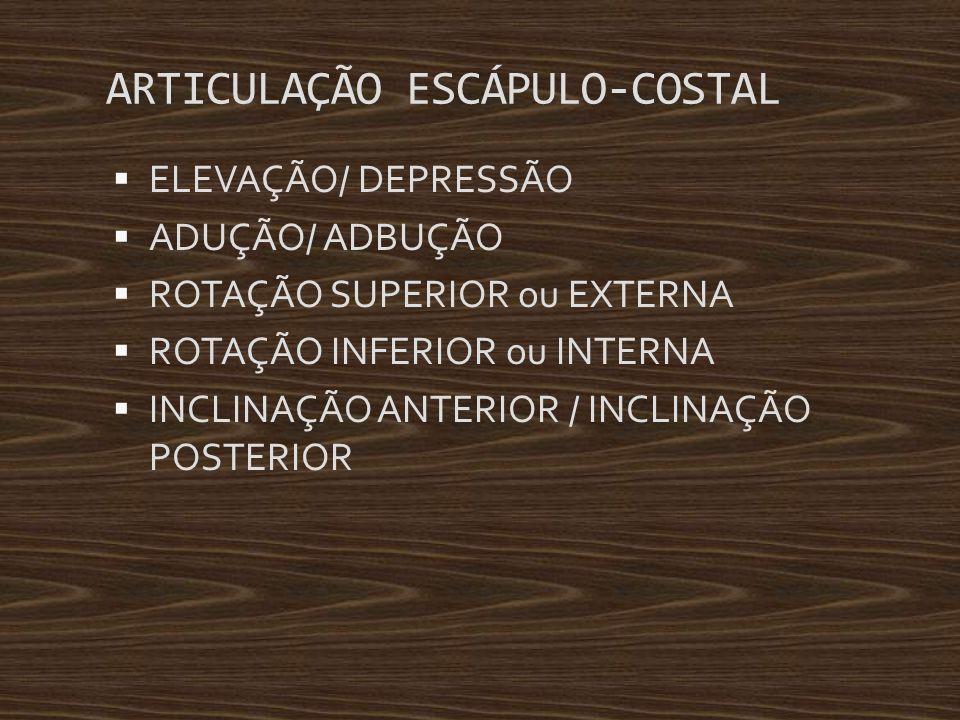 ARTICULAÇÃO ESCÁPULO-COSTAL