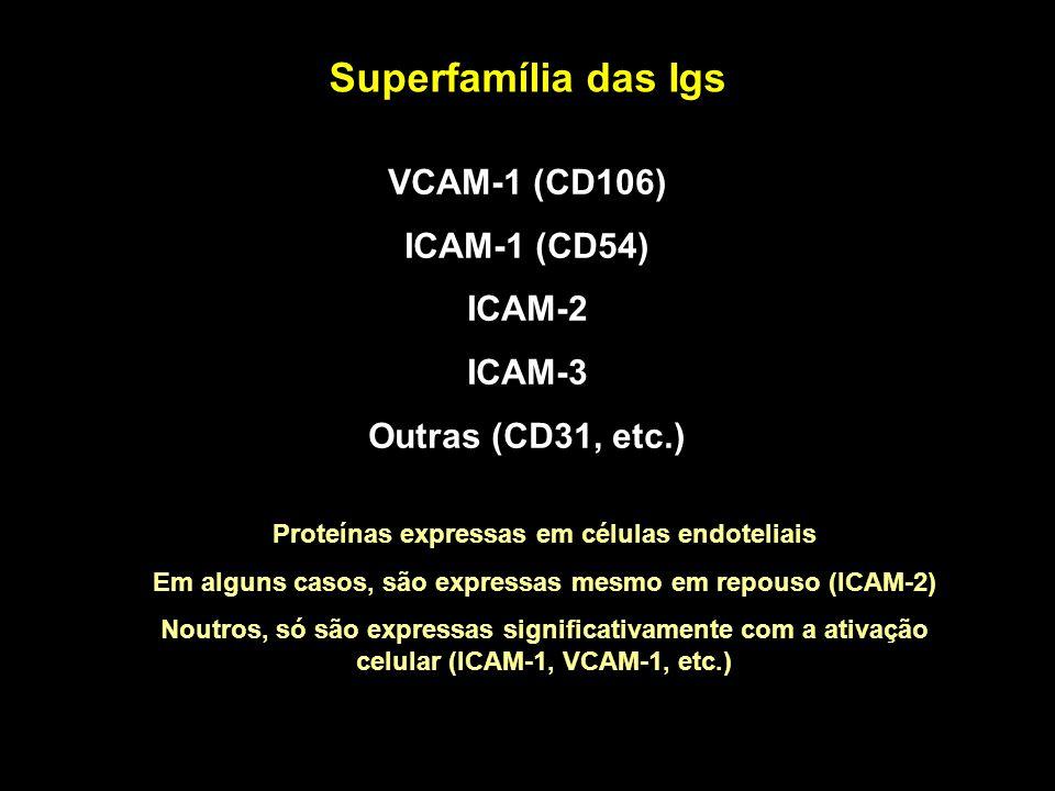 Superfamília das Igs VCAM-1 (CD106) ICAM-1 (CD54) ICAM-2 ICAM-3