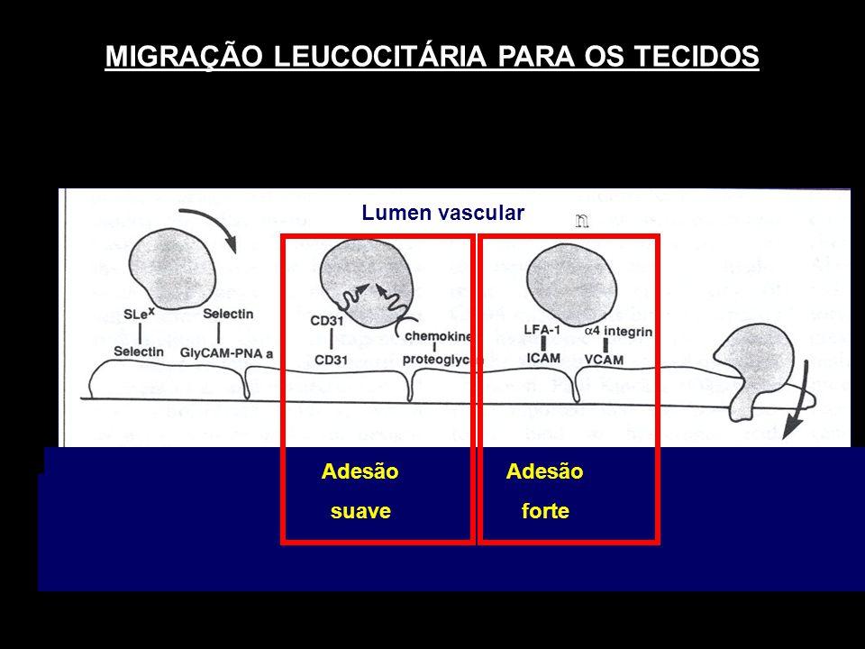 MIGRAÇÃO LEUCOCITÁRIA PARA OS TECIDOS
