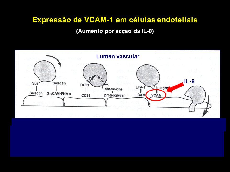 Expressão de VCAM-1 em células endoteliais (Aumento por acção da IL-8)