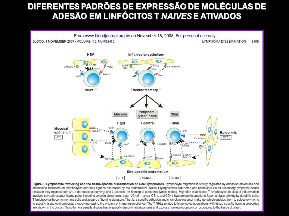 DIFERENTES PADRÕES DE EXPRESSÃO DE MOLÉCULAS DE ADESÃO EM LINFÓCITOS T NAIVES E ATIVADOS